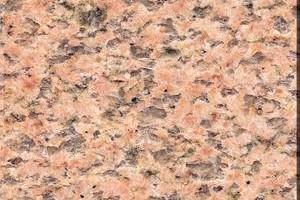 莎利士红 salisbury pink